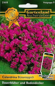 Calandrina Bl�tenteppich (Blumensamen) 802181