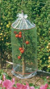 tomaten tombolino gemsesamen of westfalia das. Black Bedroom Furniture Sets. Home Design Ideas